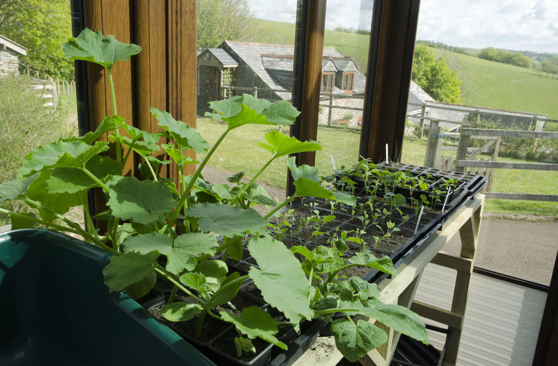 Seedlings and squash plants in conservatory
