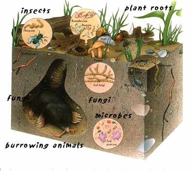 The soil is a complex and dynamic organism