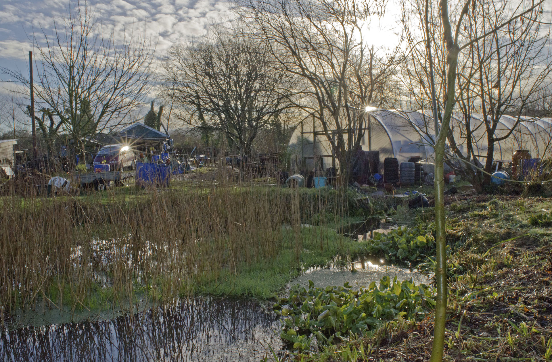 Winter pond and polytunnel